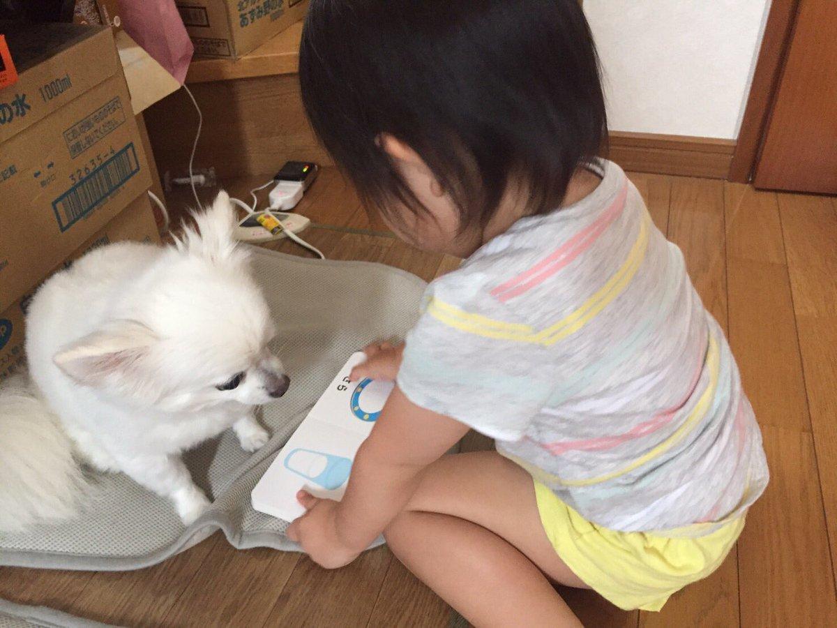 犬に日本語を教えてた#育児衝撃画像