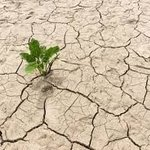 Image for the Tweet beginning: Combating Drought With #AI And