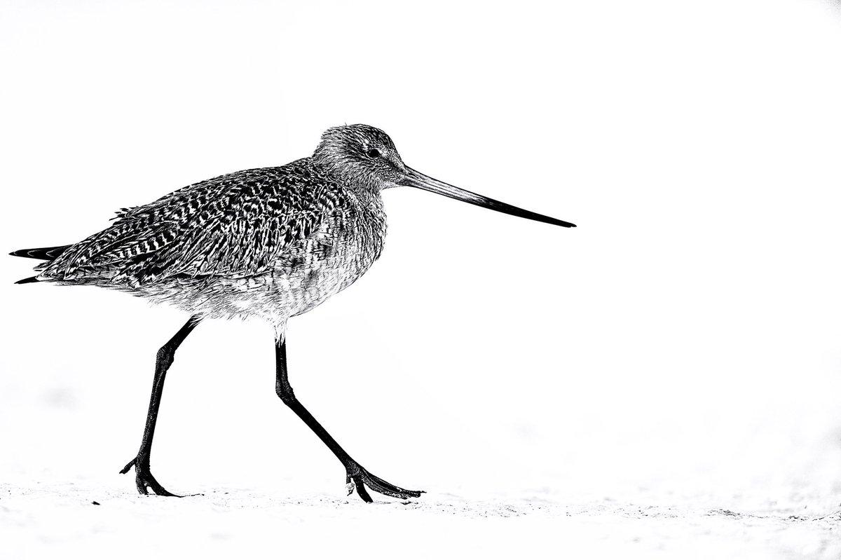 Enjoy more at https://www.ejazkhanearth.com/gallery/product/black-and-white-bird-photograph/… Thanks to @Photoshop @captureonepro @Gitzo_US  #blackandwhitebirdpictures #birdart #picturesofbirds #birdphotography #contemporaryartgallery #artgallerynyc #wildlifephotography #birdimages #birdphoto #birdpictures #ejazkhanearth #ejazkhanpic.twitter.com/PTebRyZluj
