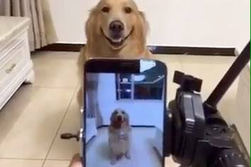 RT @targaryenmarvel: - wong yukhei as dogs; a thread -  #HappyLucasDay #黄旭熙0125生日快乐 #OurSunshineLucas https://t.co/iGm6rftg6K