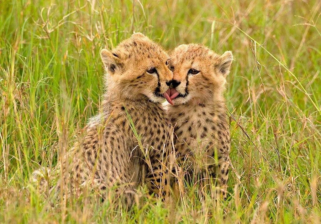 """Wildlife surprises you when you least expect it""  https://t.co/bWQkthhIZ5  https://t.co/rP3YONKkEc  #WildlifeSafarisUganda #Travel #HolidayinUganda https://t.co/H4qN2Dfjqj"