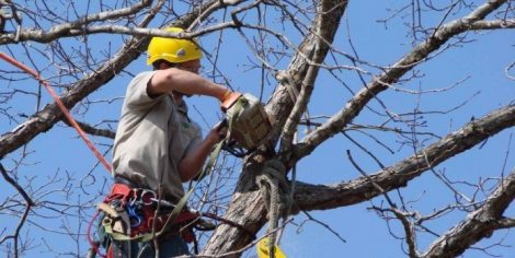 """""""Abbattimenti di alberi da ogni parte della citta"""", M5S chiede spieghi ad assessore Giambrone - https://t.co/Gqgm440hHX #blogsicilianotizie"""