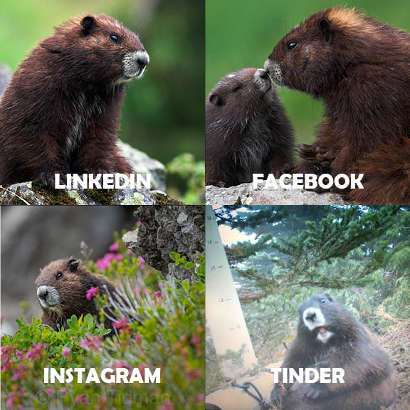 RT @MarmotRecovery: Tinder, but for endangered species....  💡💡💡#dollypartonchallenge https://t.co/1qnVqdw3W5