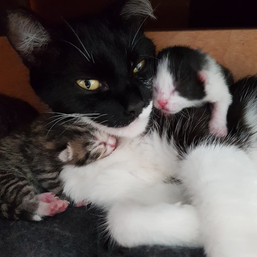 Stray cat sneaks into a guy's house, gives birth under his bed and changes his whole life 😻