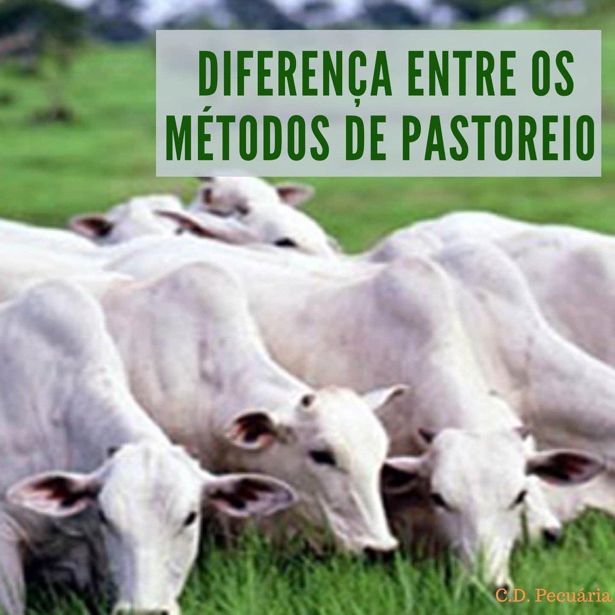 Confira o novo post no instagram @cdpecuaria sobre os métodos de pastagem, uma vez que o bom manejo do gado tem papel importante na engorda e na manutenção da propriedade.  #cdpecuaria #dicasdapecuaria #nelore #pecuariabrasil #pecuariadecorte #boidecortepic.twitter.com/3iDI1MjHSC