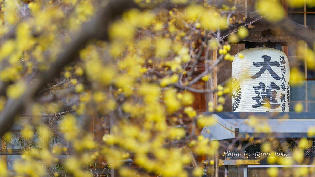 2020.1.18 散策まとめ 大蓮寺→真如堂→宗忠神社→妙蓮寺→北野天満宮→平野神社 梅や蝋梅は咲き始めの場所が多かったので、また見頃を迎えた時に。  撮影 SONY Alpha #京都  #そうだ京都行こう  #SonyAlpha #写真好きな人と繋がりたい  #Photography