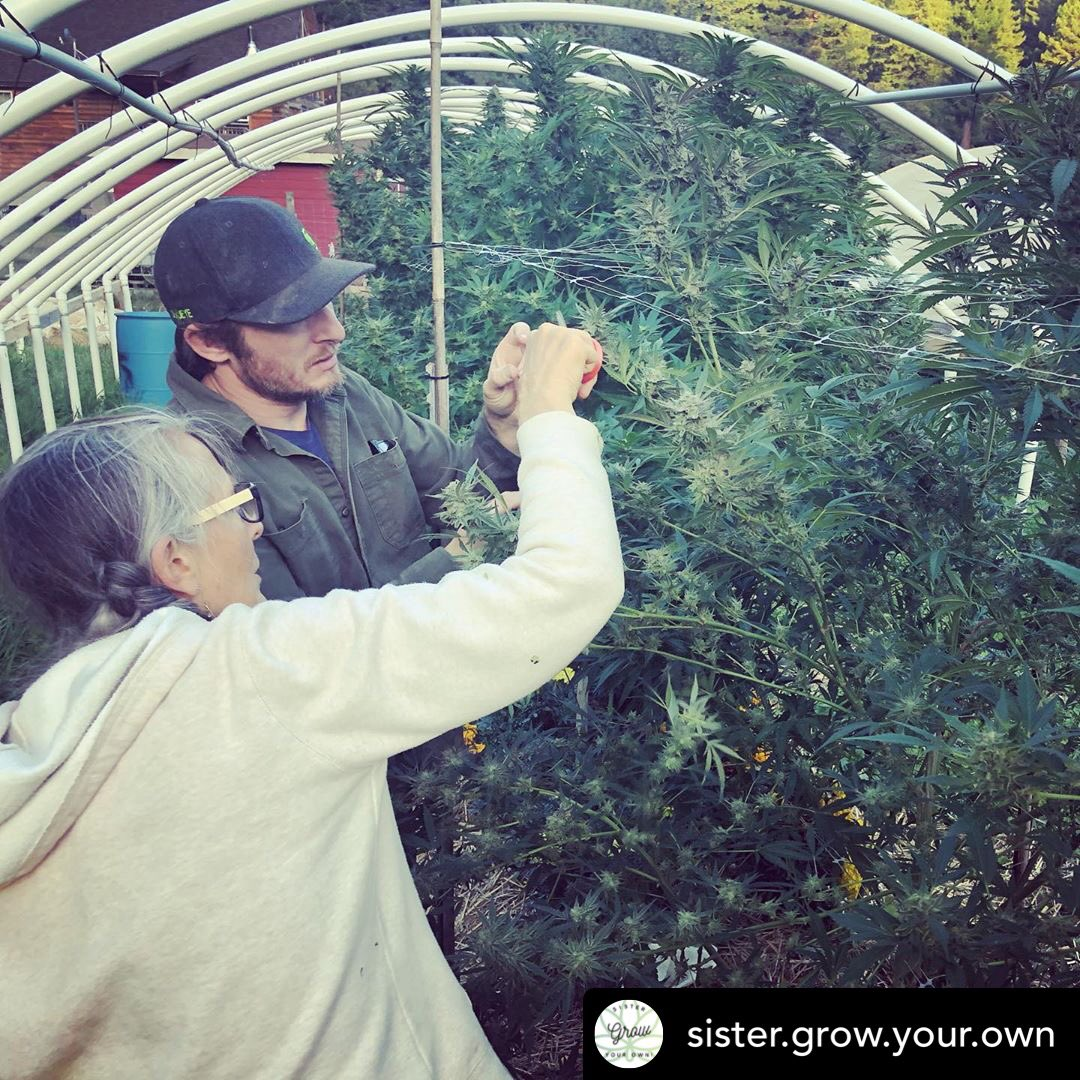 Learn to grow your own Cannabis https://www.thegrowsisters.com#growyourown #cannabis #cannabisculture #growsisters #agriculture