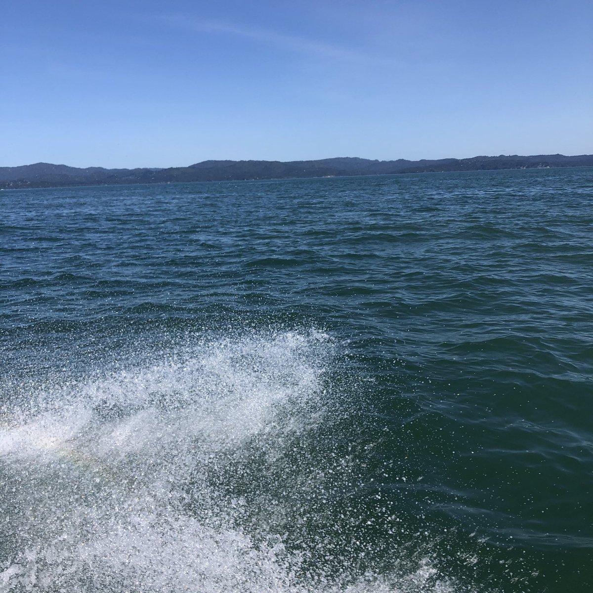when the sea spray looks like a great white shark
