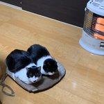 まるでスリッパ!?そっくりの二匹の猫がかわいい!!
