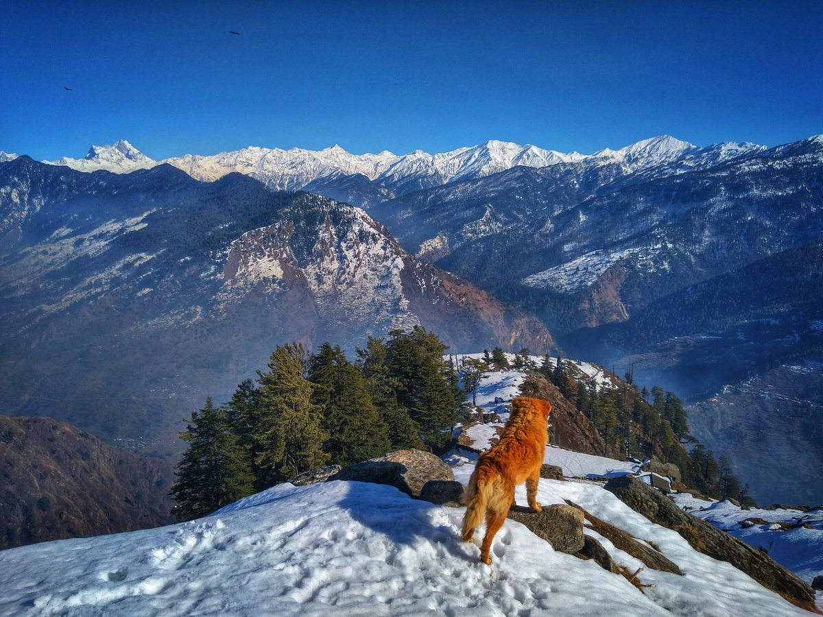 Chocolate @ Karba Top. Jan 2020.  Amazing pristine snow, just an hour's hike from Kalap Village (http://www.kalap.in )  #letsgo #TonsTrails #TonsValley #kalap #himalayas #uttarakhand #mountains #village #picoftheday #unknownplaces #hills #backtonature #snowfall #snow #winter