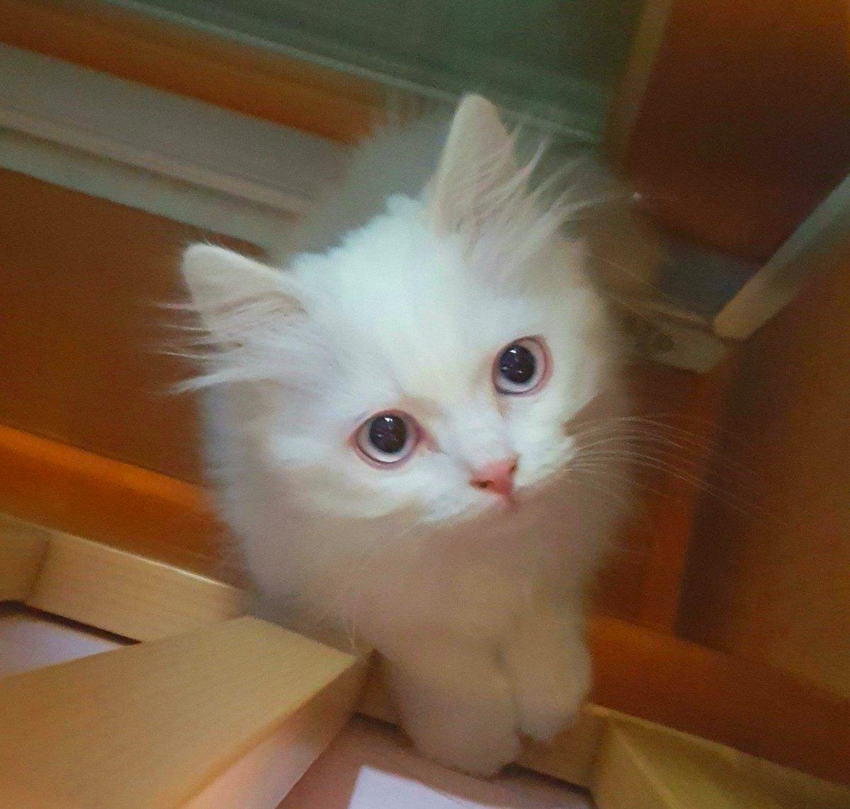 #오타쿠_이미지의_편견을_깨부숴보자  더러운거보지말구 저희집 귀여운 고양이 봐주세용