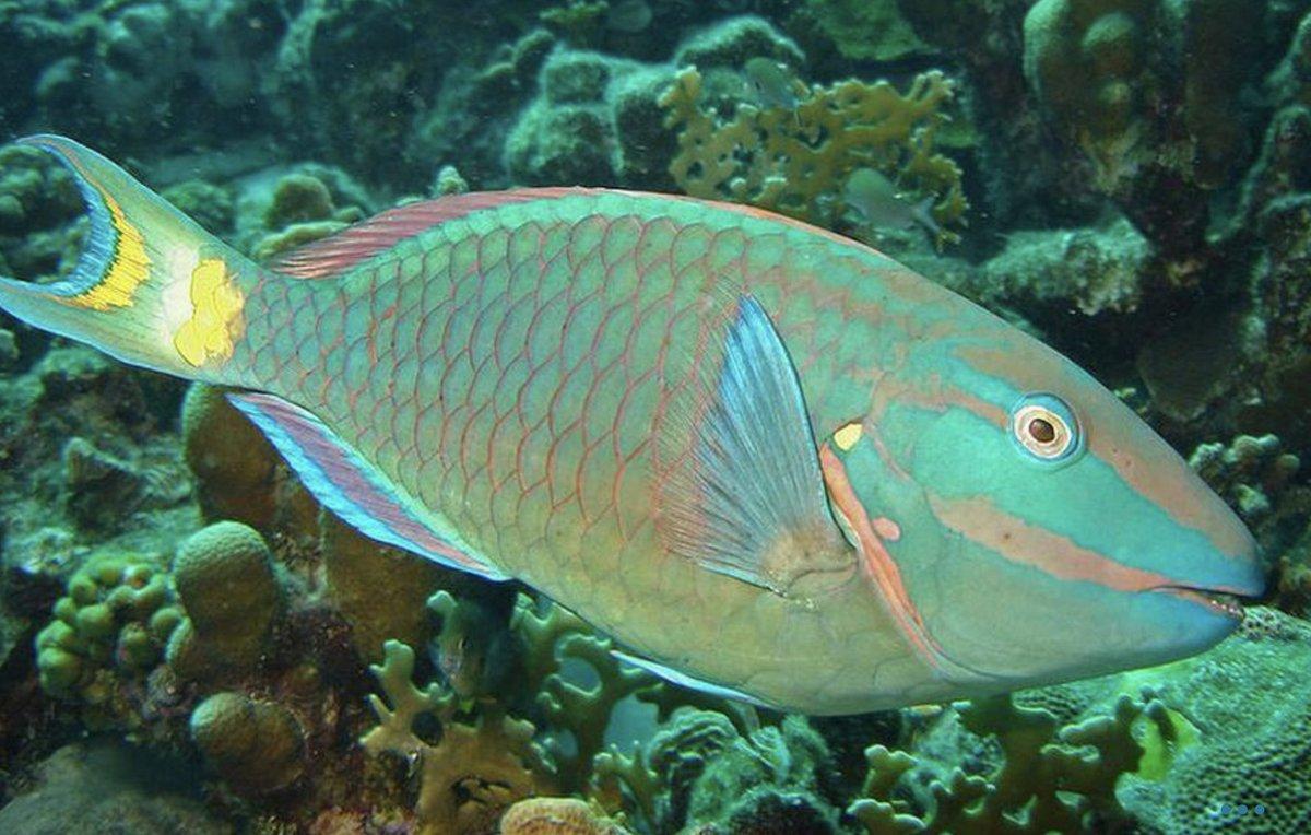 некоторое картинки рыб пород всегда