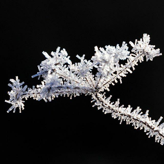 L'hiver est si doux, que chaque gelée nous fait redécouvrir la beauté de l'hiver  #picoftheday #nature #ice #flowers #fleurs #flore #cristal #winter #hiver #white #black #witheandblack #jura #juratourisme #bourgognefranchecomte #regionbourgognefranchecom…