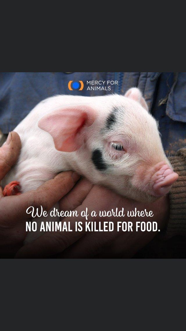 #OneVoice #Alf #Vegan #Wolves ♥️#AnimalRights #Allivesmatter #Earthlings #Yulin #Catmeat #Dogmeat #Bullfighting #NoMoreZoos #Emptythetanks #Emptythecages #Wildlife #Climatechange #Taiji #Fur @WilmaBaumann2