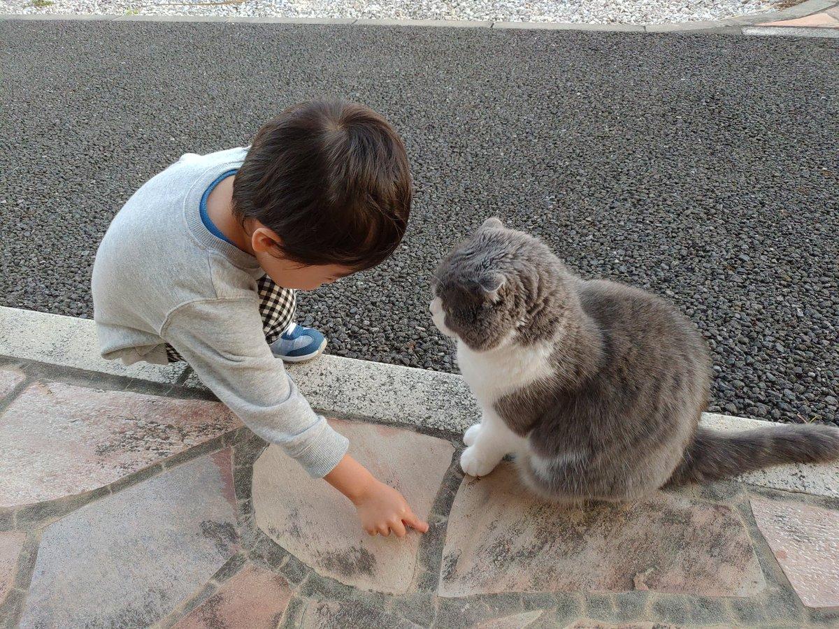 飼い猫に保育園までの道のりを仕込んで迎えに来てもらおうと画策をする息子 #育児衝撃画像
