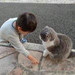 保育園に通うお子さんが飼猫に、保育園に迎えに来て欲しいから道のりを教えているw猫も真剣に聞いている!