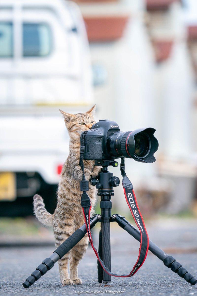 カメラマン 逃走 中