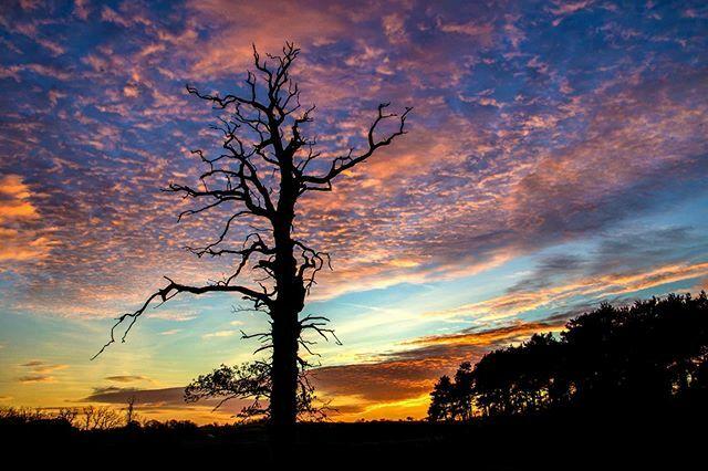 Ellesmere Photo of the week #11  Lone tree sunset  #ellesmere #shropshire #mere #northshropshire #rural #sunset #water #reflection #sky #landscapephotography  #sunrise #landscape  #drama #sun #sky #purple  #drama #purple #ordnancesurvey #themere #lake #l…