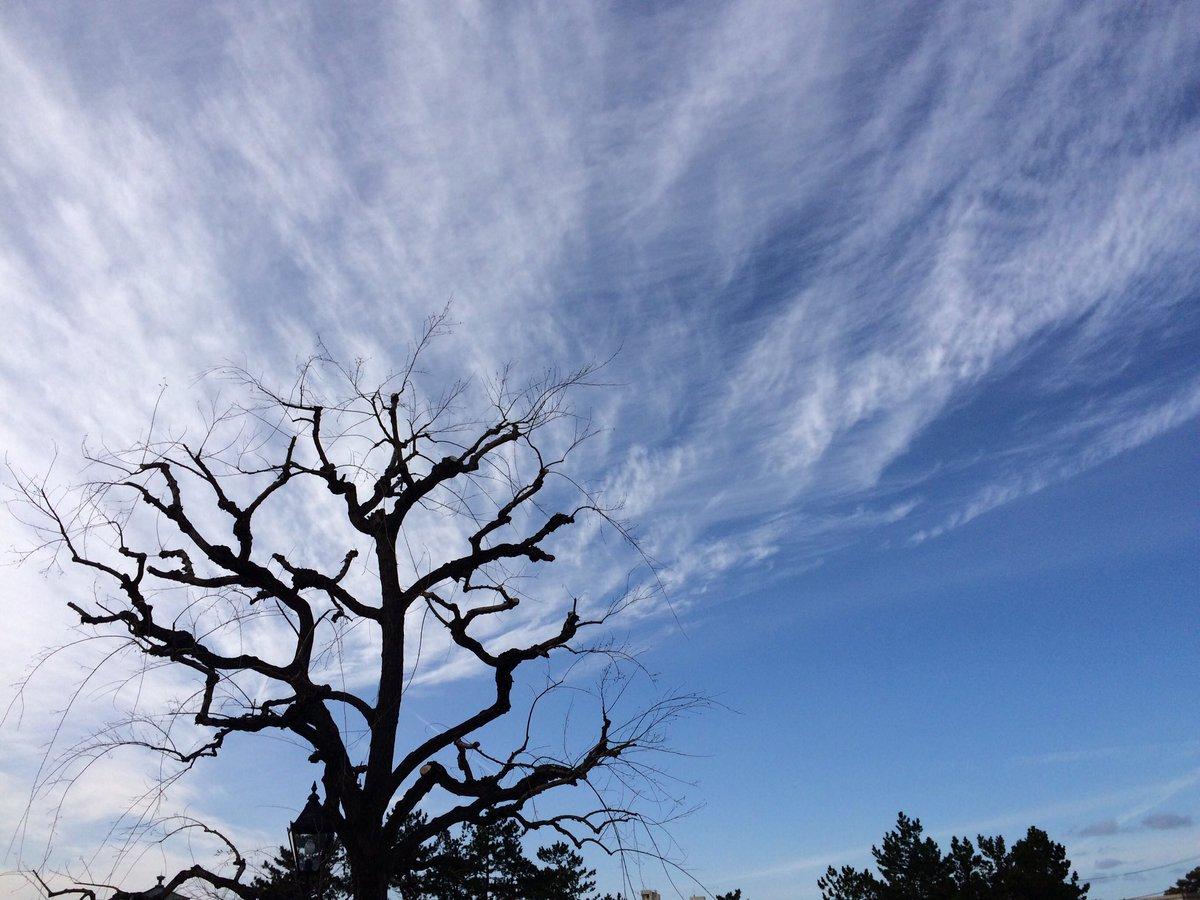 新潟一月ノ抄景 Niigata Jan. Extracted Views  #photography #landscape  #写真 #Niigata #clouds #sky #trees