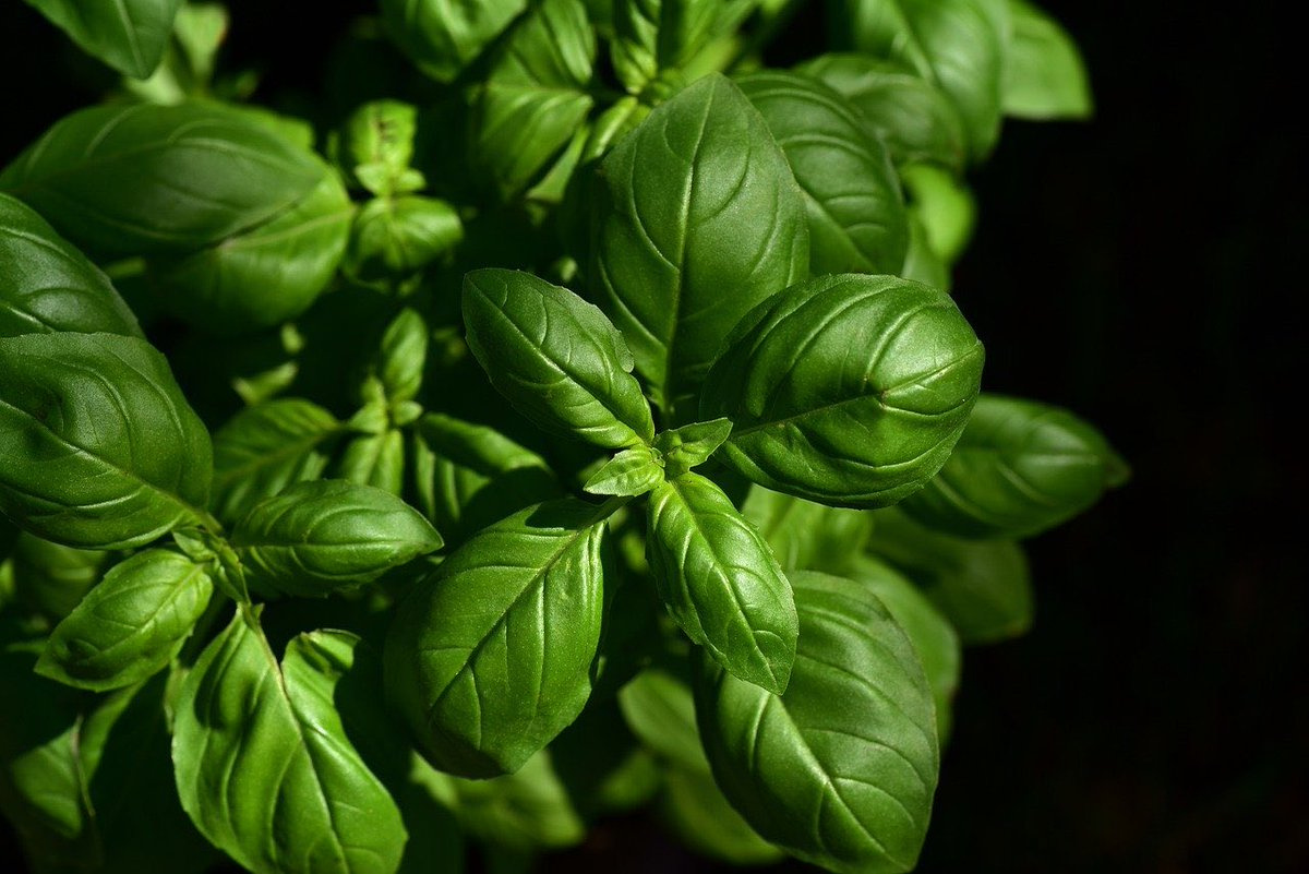 植物はストレスを感じると『超音波の悲鳴』を発していたことが判明