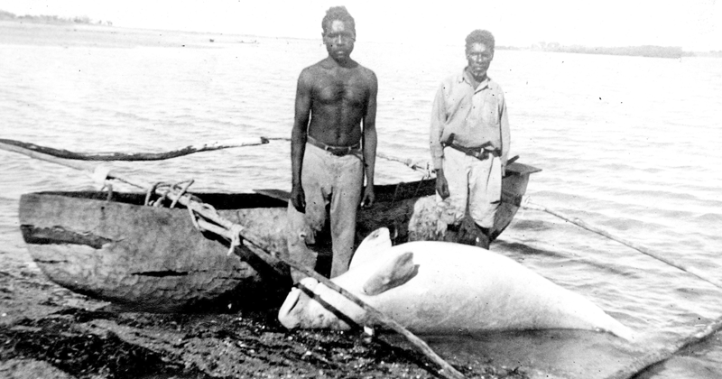 THEN: Sea turtle, dugong abundant Traditional craft Relatively low population of Indigenous hunters  NOW: Sea turtle, dugong endangered and vulnerable to extinction Motorboats Modern gear Vast populations of Indigenous hunters - many multiracial; Anglo, Japanese, Kiwi, Indian etc <br>http://pic.twitter.com/7JDq7VMu4E