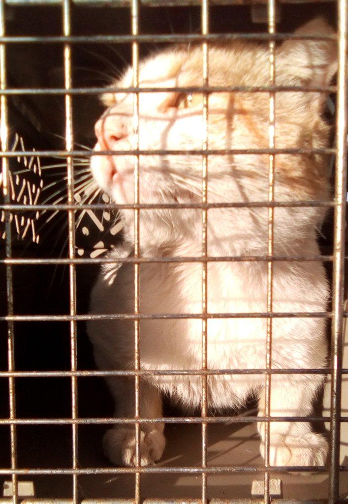 Ya estamos anotados! Carlos es el 12!  Amé la lista de los felinos y sus nombres  Yo estoy tan nerviosa como él...lo entiendo, tampoco me gusta la anestesia  #catslife  #catslovers https://twitter.com/LaChina__Lo/status/1220884160434331649…pic.twitter.com/RIa6GuvvQ8