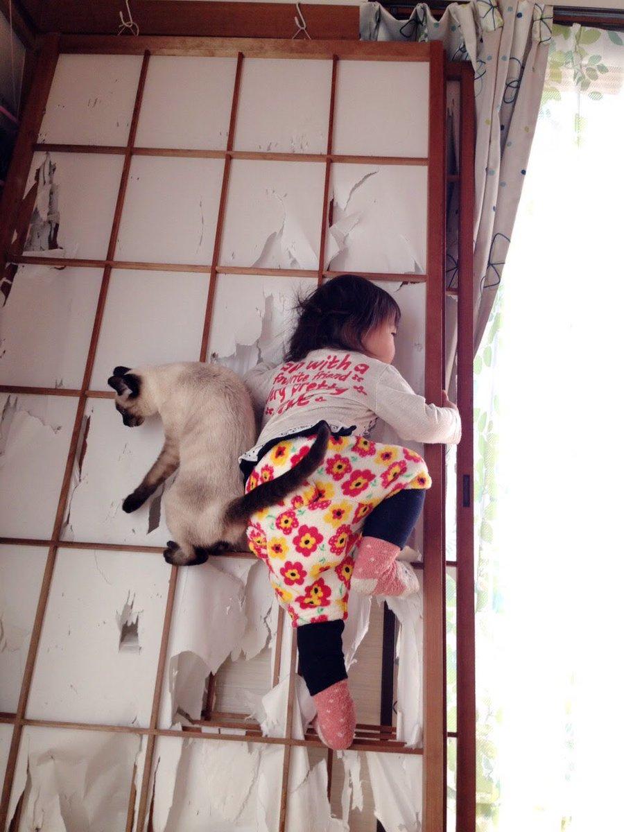 #育児衝撃画像猫に遊び方のレクチャーを受けていた