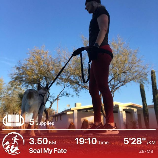 First outside run in a week. Sniffer 3 was feeling spunky so made good time. .  #optoutside #zombies #zombiesrun #running #iamrunner5 #zombieapocalypsetraining #zombieshatefastfood #cardio #rulenumber1  #netrophil #zombieoutbreakresponseteam #sarahconnor… https://ift.tt/3aJsGqIpic.twitter.com/LFmEa3QtuR