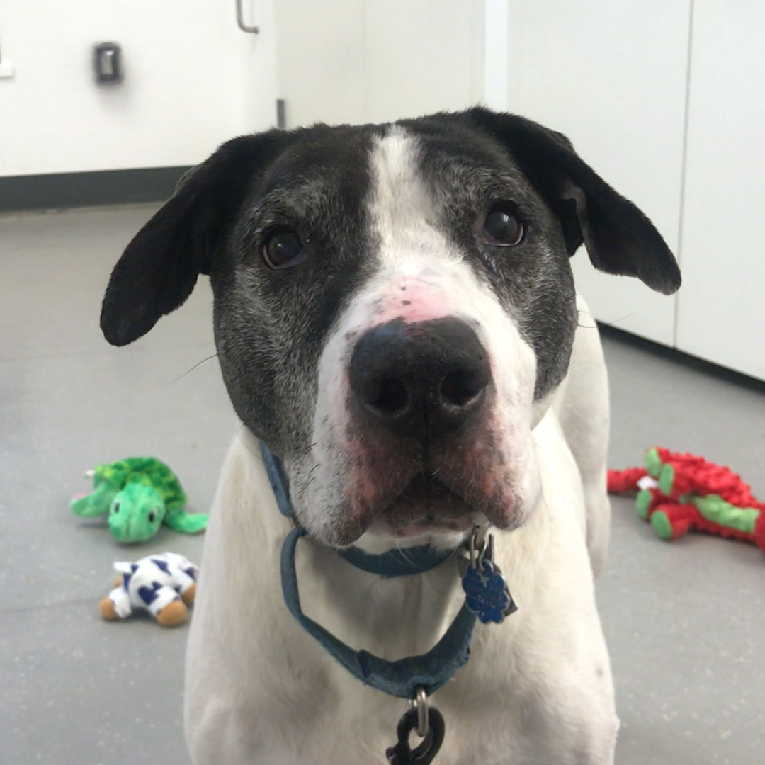 Senior dog found tied to a pole needs a hero ❤️️