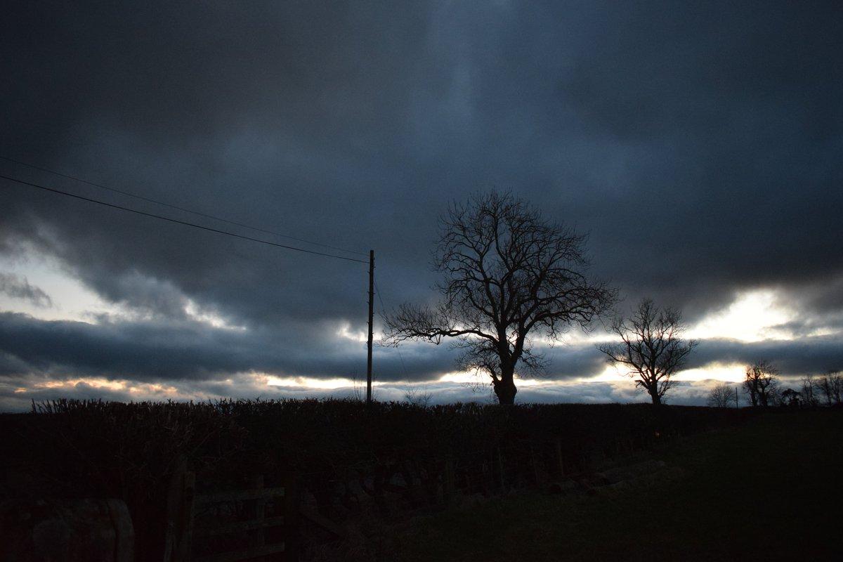 I do like the trees in the dusk light #Northumberland <br>http://pic.twitter.com/XBau8gjS4V