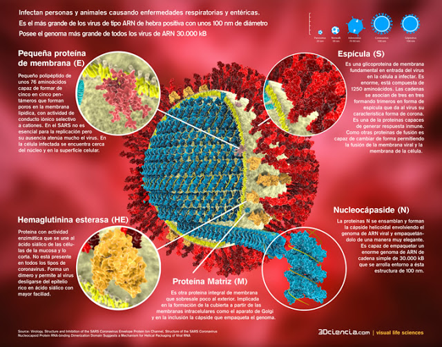 Medidas Preventivas frente al Nuevo Coronavirus... EPJO8GGWoAA-rJc?format=jpg&name=small