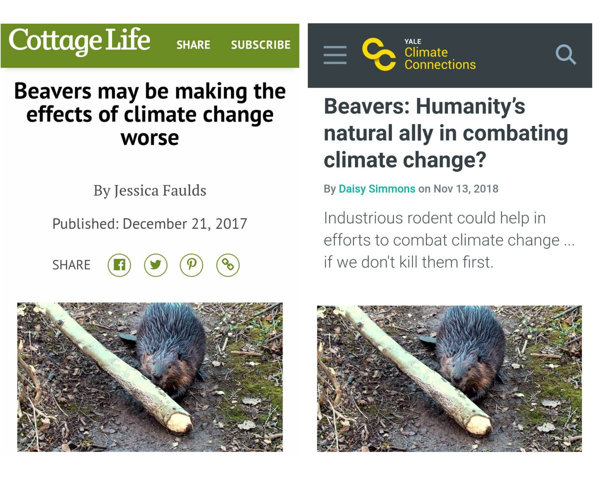 SETTLED SCIENCE says.....Beavers may make climate change WORSE!andBeavers may HELP combat climate change!🤨