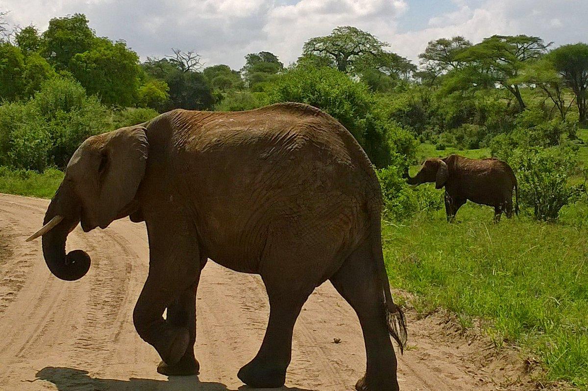 It's a Photo Sunday!  Stunning Tanzania safari photos by Ballela  #animalsonland #naturephotography #animal #wildlifeonearth #wildlifeowners #wildlifephotography #wildlifeaddicts #wildanimals #earthlifeexpeditions #animalonearth #tanzaniasafaripic.twitter.com/9oYkcrpx1Q
