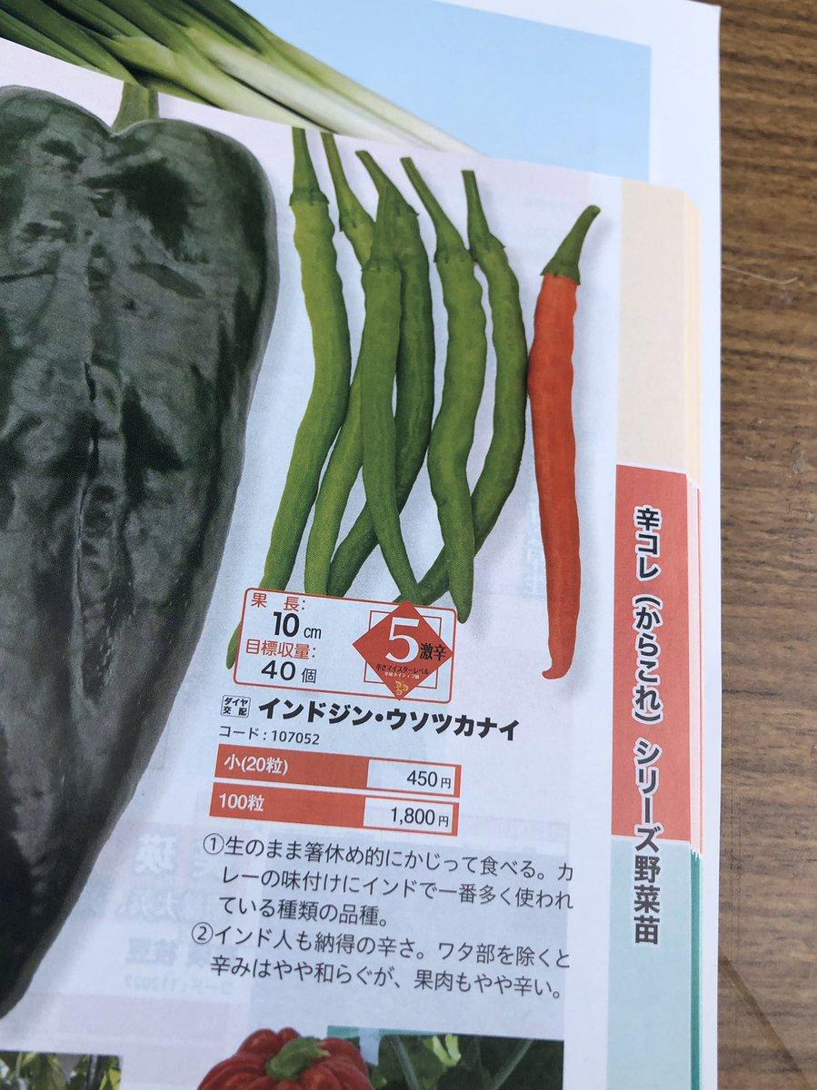 すごい野菜見つけてしまった…