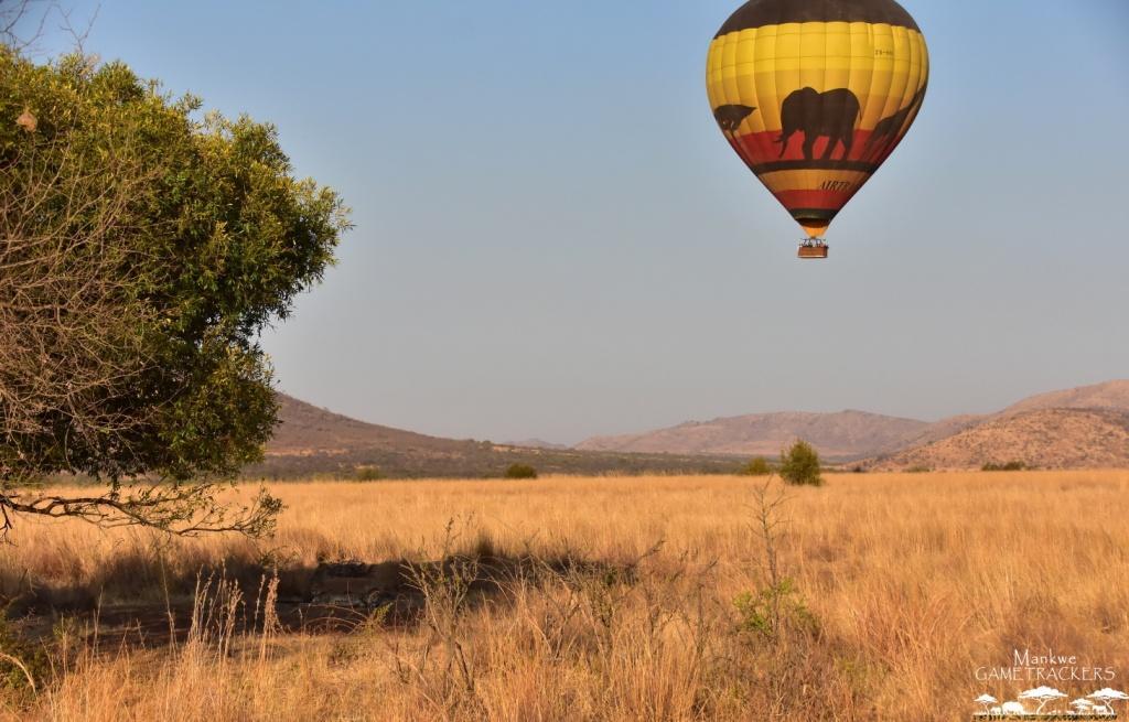 Flying over the Pilanesberg National Park#MankweGAMETRACKERS #Welcometoouroffice #hotairballoon #taketotheskies #bucketlist #travelphotography #Nature #SouthAfrica #Travel #awesomeglobe  #wildlifeonearth #wildlifeplanet #WorldCaptures #BeautifulDestinations #TravelAwesomepic.twitter.com/DCyq4RTiVl