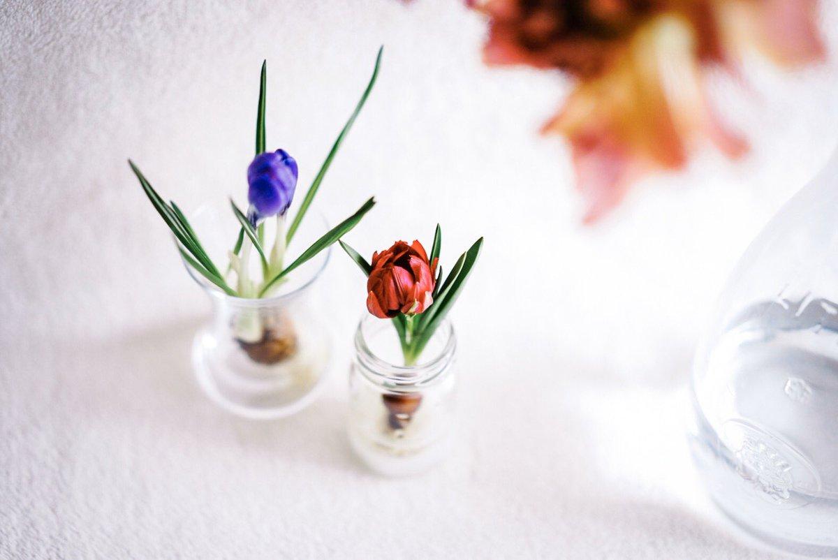 部屋の中に咲いてる春がすき