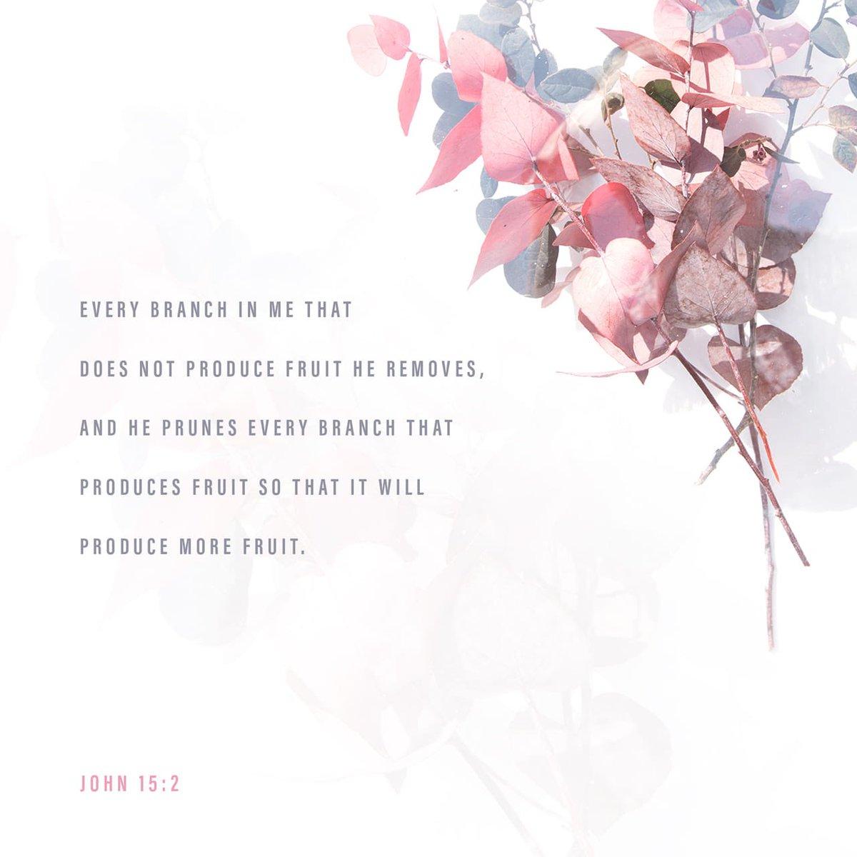 bible.com/59/jhn.15.2.esv