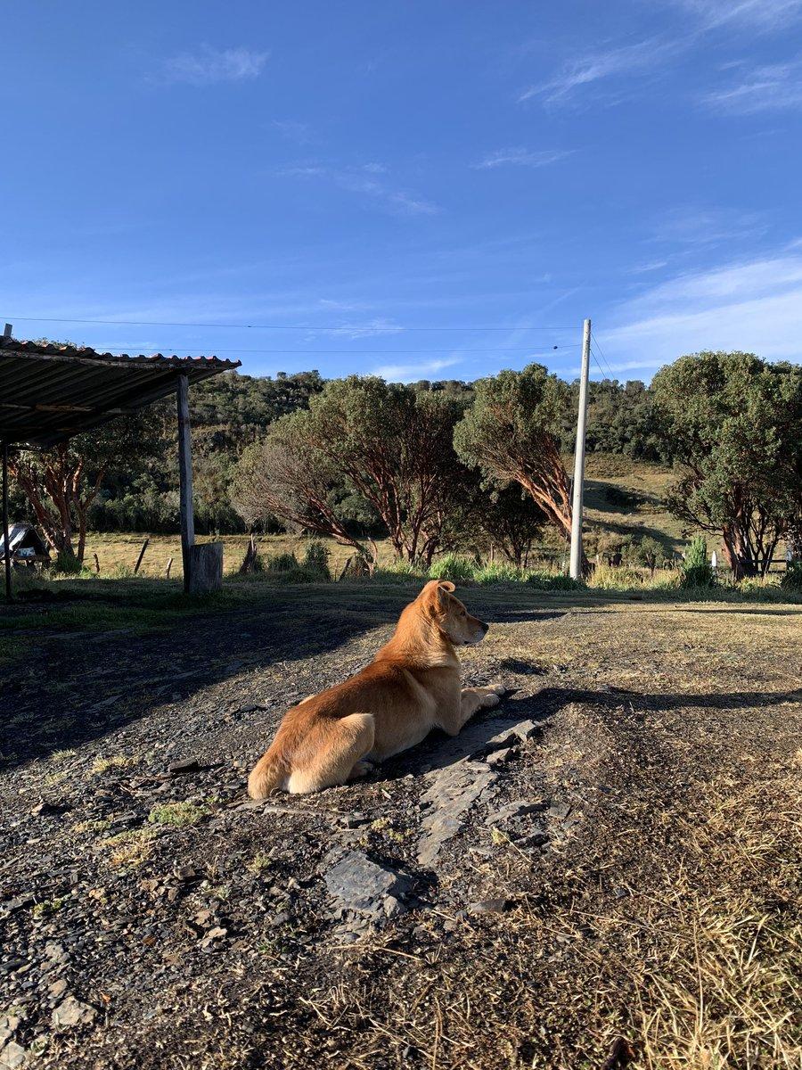 Perros de la Colombia Rural pic.twitter.com/6lp5tWO8Wf