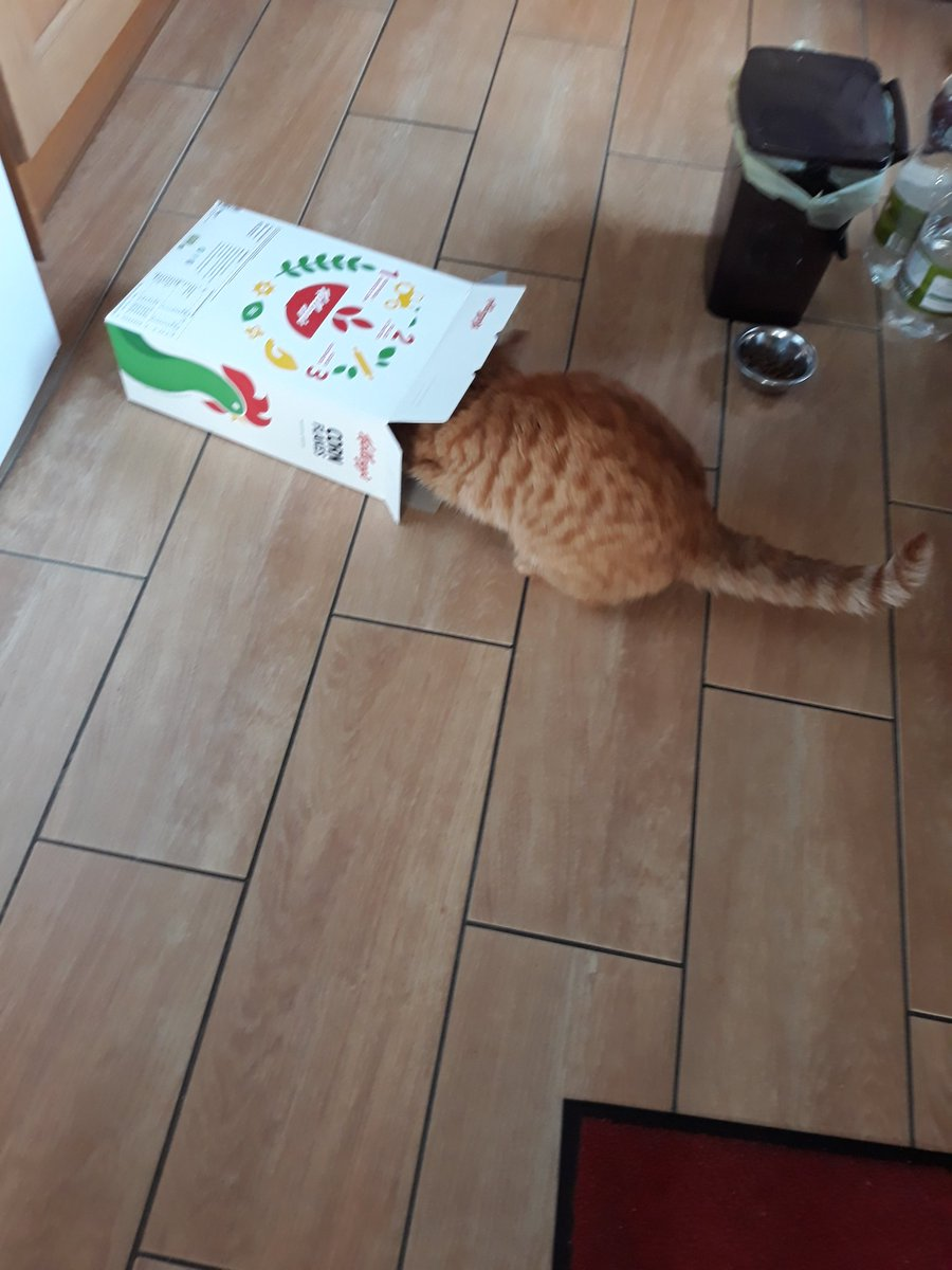 Forget #Caturday, the real fun starts on #FundaySunday with Timmy propelling the @KelloggsUK Cornflakes box around the kitchen at speed!  #Simplicity 😻😻😻😻