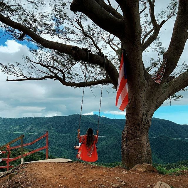 🌳🇵🇷 #PuertoRico 🌤🌴 📸by: @island_passenger #LaCurvadelArbol 🌅  #nature #green #sky #sun #summer #beach #beautiful #pretty #sunset #sunrise #blue #flowers #night #tree #twilight #clouds #beauty #sharetuisla #photooftheday #beach #mountain #love #du…