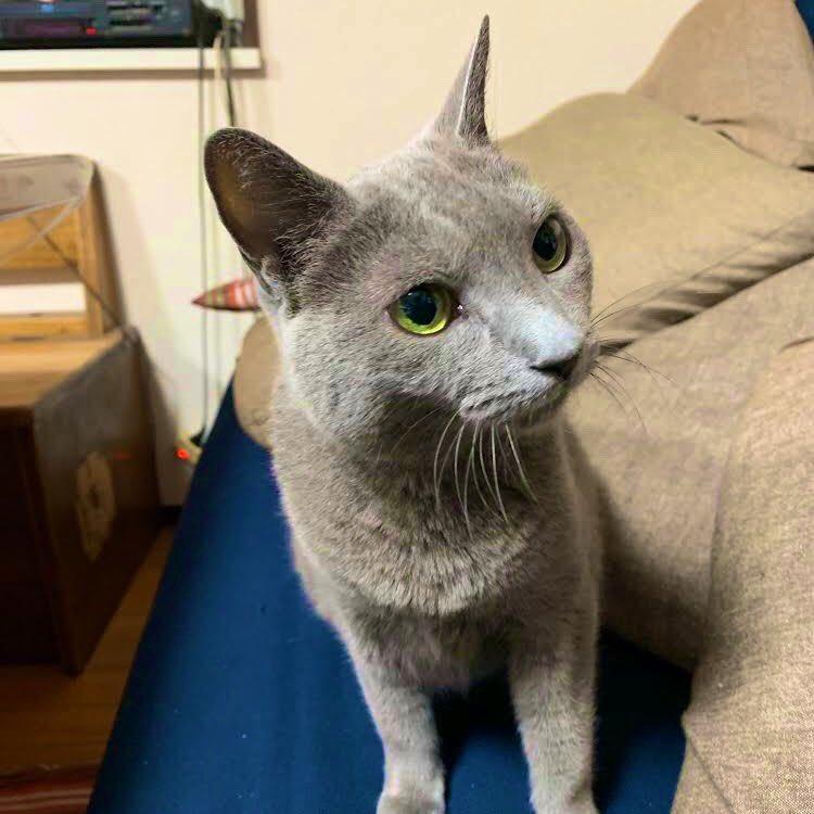 実家の猫は「山田」という愛称で長年親しまれてきたが、この前 色々家を整理していたら血統書が出てきて、よく見てみたら元々の名前が「ライトニング・トーマ・ジャネット」だったという事が判明した。うちの適当なオカンにより山田と命名されていたが、とても高貴なお方だった。もう気安く呼べない。