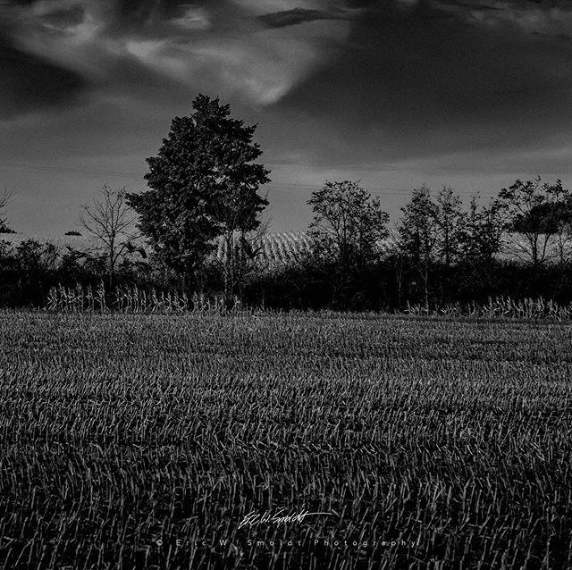 Farm Life VI Monochrome . . . . . #aurelius, #michigan, #themitten, #clouds, #sky, #canon, #canonphotography, #eos, #ericsmoldt, #ericsmoldtphotography, #blackandwhite, #bw, #monochrome, #bnw, #blackandwhite, #bnw_captures, #bnw_detaillovers, #bnw_fanati… https://ift.tt/2Ru5CEGpic.twitter.com/LTHZQsGTfS