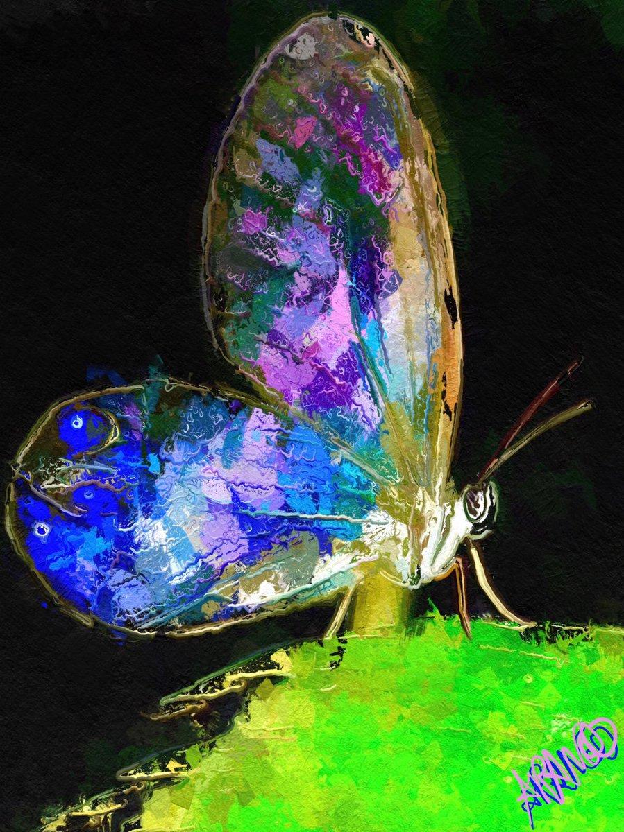 Mariposa vagarosa ... #butterfly #butterflies #contemporaryart #painting #colorspic.twitter.com/LVS1B3Oso9