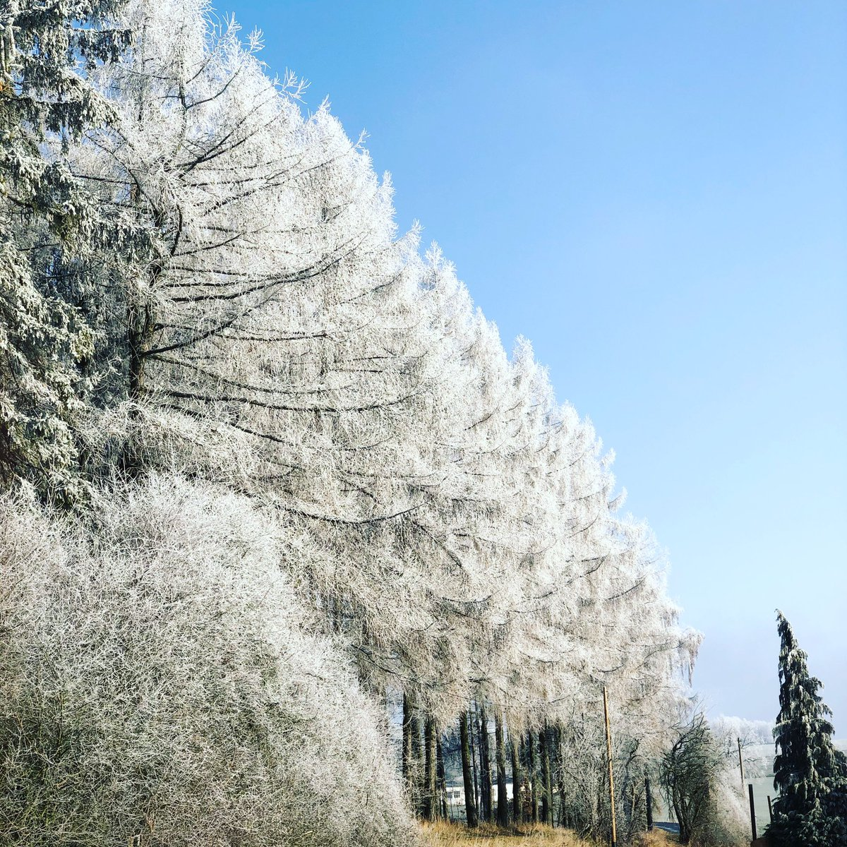 #frost #frosty #eisig #winter #rime #reif #blauerhimmel #adventure #adventureofalifetime #vivalavida #abenteuer #abenteuerleben #championoftheworld  #travel #travelphotography #reise #reisen #reisefotografie  #nature #natur #landscape #landschaft #landschaftsfotografie pic.twitter.com/yPLurOCjfm