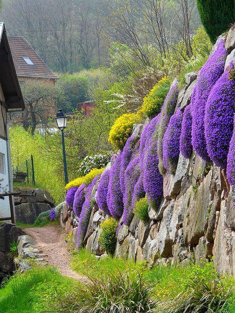 Alsace #France pic.twitter.com/vv5o9HK86X