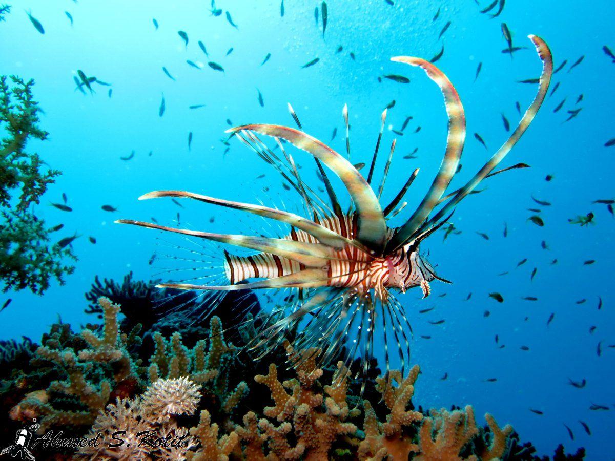 Snorkeling around Giftun Island  #GoHurghadaTrips #Egypt #Hurghada2020 #summer #sea #island #Travel #Sun #Turtles #dolphins #luxor #Aswan #travelgram #travelphotography #traveling #traveltheworld #travelphoto  #traveladdict #travellife  #travelholic