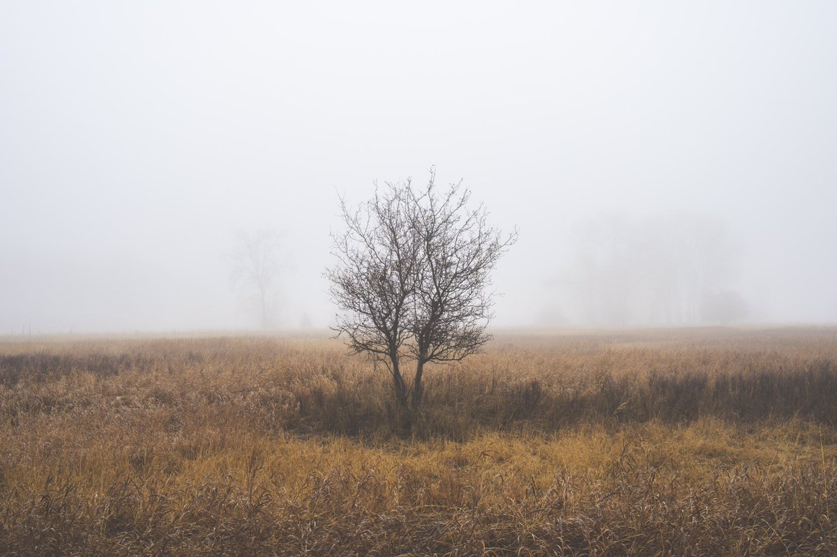 Foggy mornings are tremendous for composing a photograph where a subject and scene ooze a sense of #simplicity. This lone black hawthorn stands gaunt and subtle with mist-shrouded cottonwoods in the distance frame the scene. . . . #foggy #morning #montana