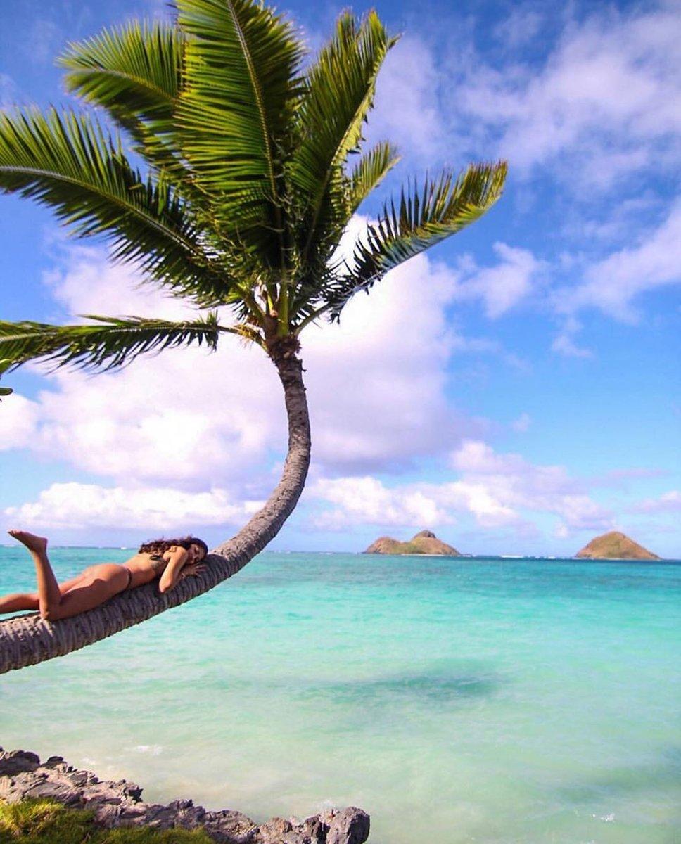 Shhh… don't tell Monday we're here  (IG: symphonyy_) #havealohawilltravel #travelinspiration #hawaiiunchained #travelhawaii  #theseviewstho #unlimitedhawaii #lanikaibeach #beachviews #beachchic #lanikai #aloha #beachstyle #beachlife #beachday #beaches #ビーチ #ビーチフォトpic.twitter.com/HE1cGWk23B