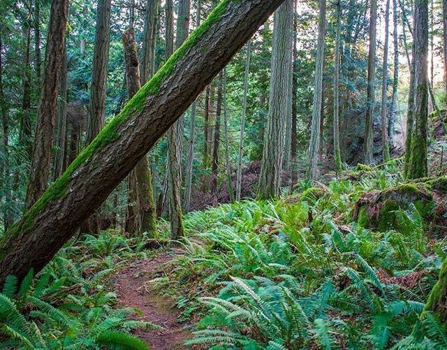 There's a reason they call it the emerald island... #pnwonderland #photography #pnw #landscapephotography #trails #hiking #orcasisland #sanjuanislands https://ift.tt/2Rx0v6R pic.twitter.com/Tl84sjTlgb