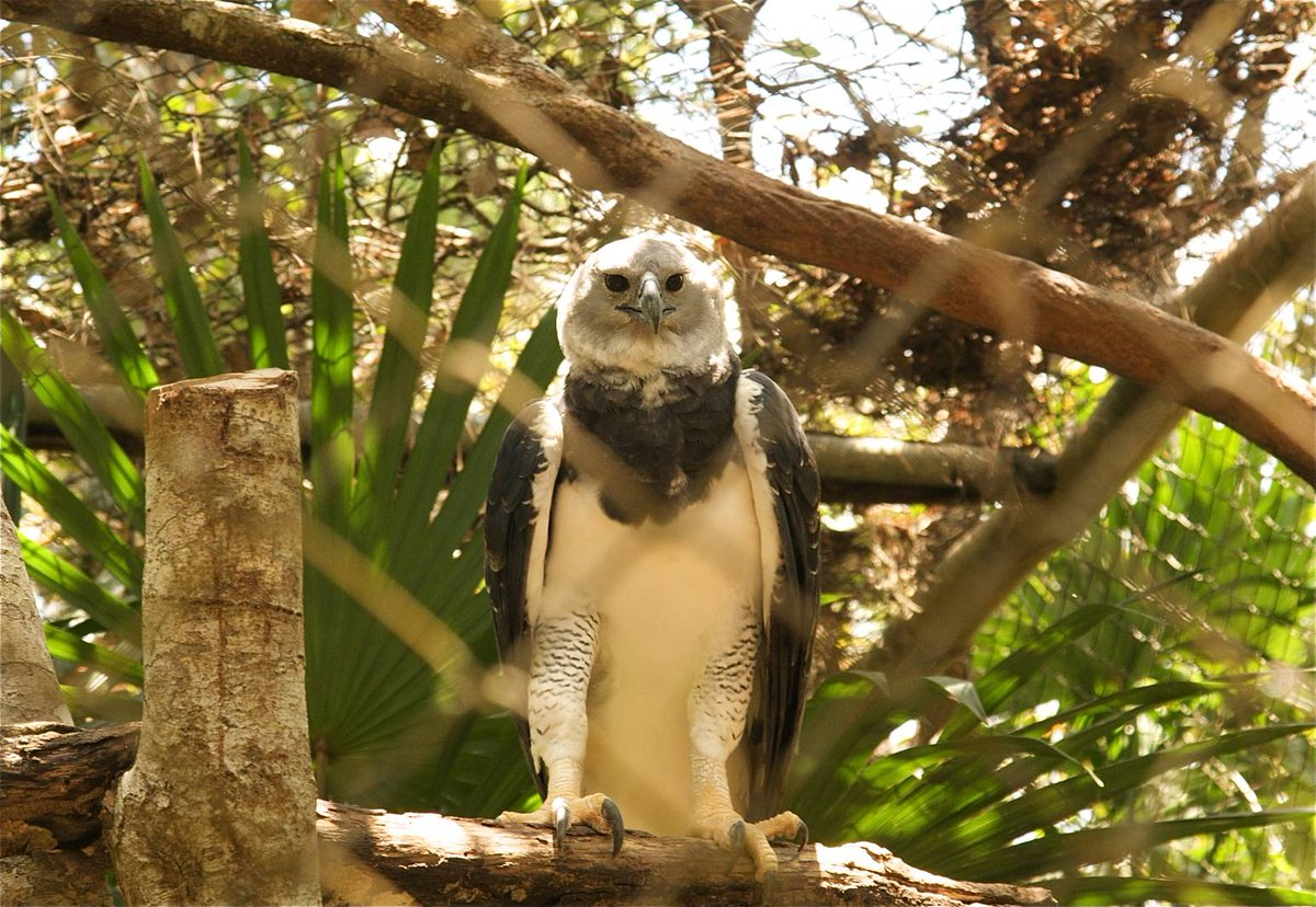 test Twitter Media - Did you know the Harpy Eagle has a wingspan of up to 6.5 feet long? Come down to see these majestic birds at the zoo.  Belize truly has something for every traveler. Families will love exploring the Belize Zoo, home to the country's native animals: https://t.co/cQatAXt2hG https://t.co/Ze6PLTzJcu